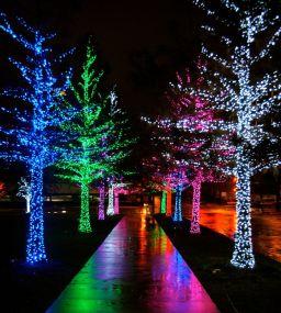 f3a0657857d201a24bc54804354846cc--xmas-lights-twinkle-lights